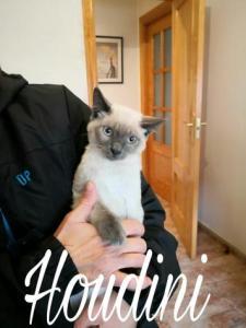 Gatitos rescatados de un contenedor